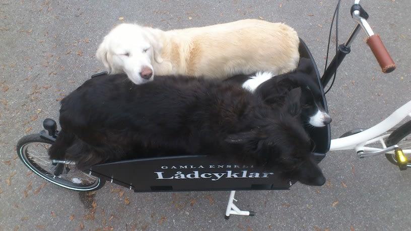Första hundbesöket 2011