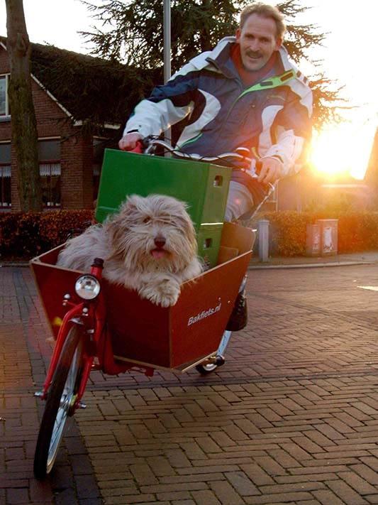 lugn hund i lådcykel trots lastningen Bakfiets.nl