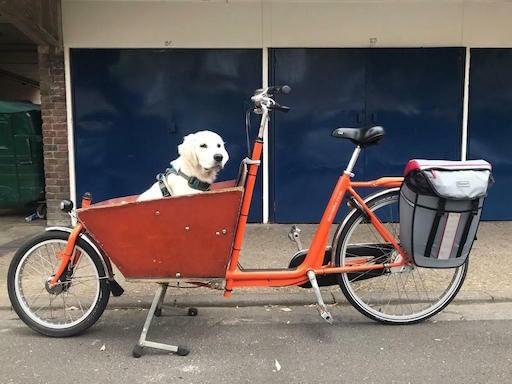 Ensam hund i urgammal Bakfiets.nl