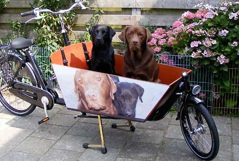 Hund-dekal på lång bakfiets.nl lådcykel