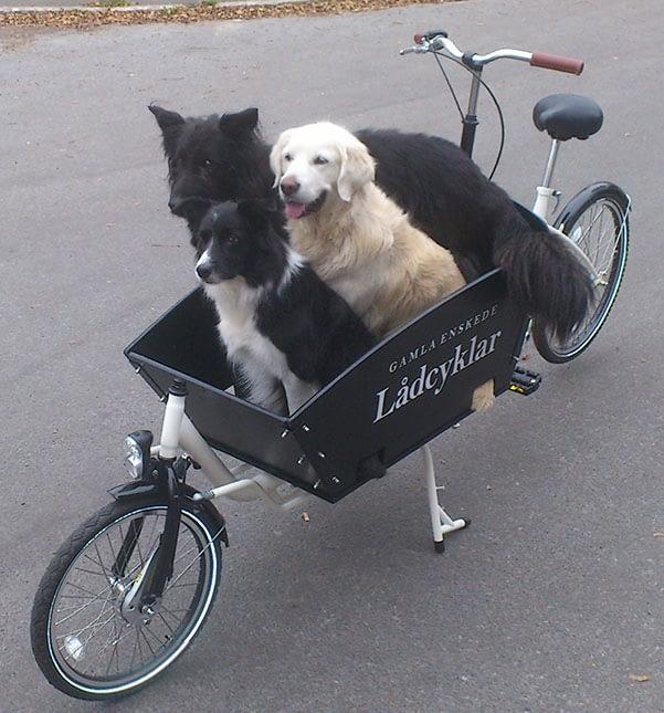 Första hundlådcykeln vi levererade 2011