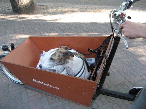Hunden sover i lådcykeln Bakfiets.nl lång