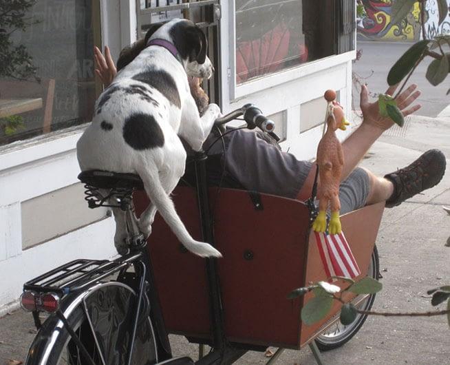 Hund kör man i lådcykel Bakfiets.nl
