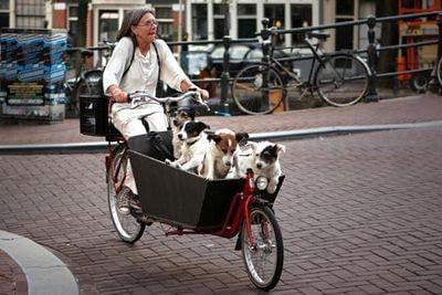 Fyra hundar i en Bakfiets.nl-lådcykel Fyra hundar i lådcykel Bakfiets.nl