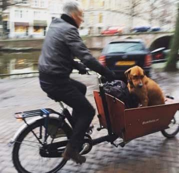 Brottom med hundarna i lådcykel från Bakfiets.nl