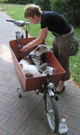 Hund felaktigt kopplad i lådcykel