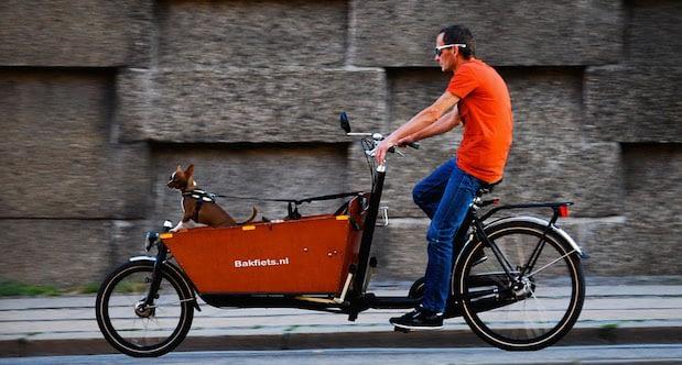 Tuff hund i snabb Bakfiets.nl-lådcykel